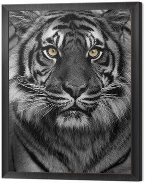 Framed Canvas Tiger eyes