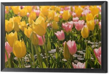 tulip Framed Canvas