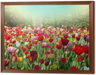 tulipani Framed Canvas