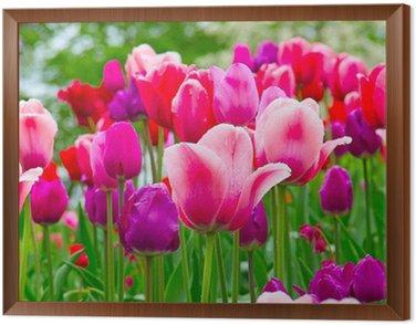 Tulips Framed Canvas