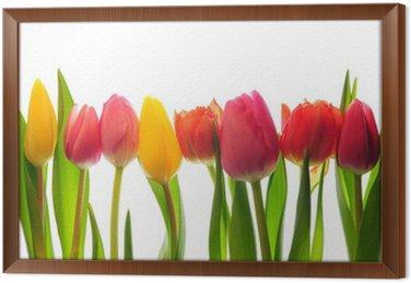 Framed Canvas tulips