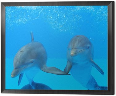 Framed Canvas Two dolphins in the water