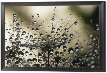 Framed Canvas wet dandelion seed