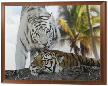 Framed Canvas White And Brown Tigers