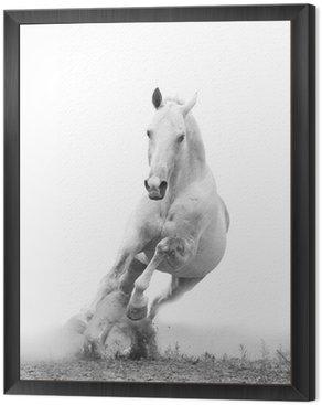 Framed Canvas white horse