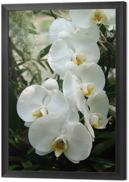 white orchid Framed Canvas