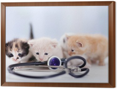 Framed Canvas young kittens with a stethoscope