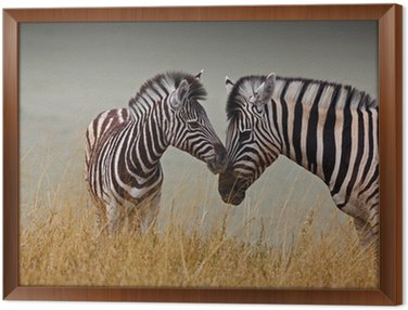 Framed Canvas Zebre - Madre e figlio