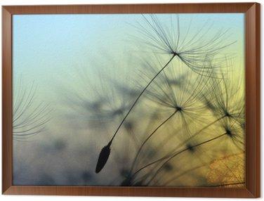 Gerahmtes Leinwandbild Goldener Sonnenuntergang und Löwenzahn, meditativen Zen-Hintergrund