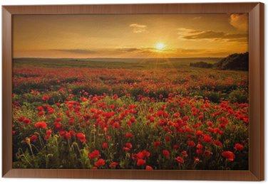 Gerahmtes Leinwandbild Mohnfeld bei Sonnenuntergang