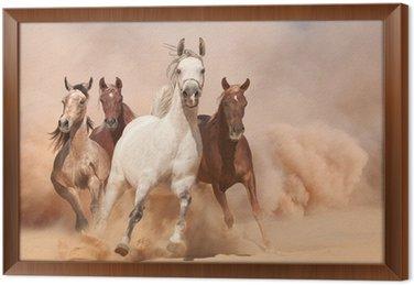 Gerahmtes Leinwandbild Pferde im Staub