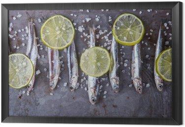 Gerahmtes Leinwandbild Sardelle Fresh Marine Fish.Appetizer. selektiven Fokus.