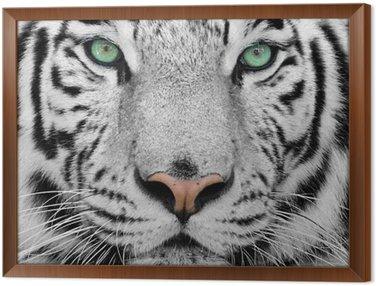 Gerahmtes Leinwandbild Weiße tiger