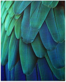 HD Poster Ara-Federn (Blau / Grün)