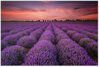HD Poster Atemberaubende Landschaft mit einem Lavendelfeld in der Dämmerung