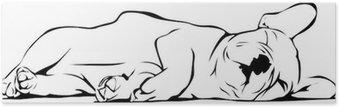 HD Poster Französisch Bulldog Baby Sleeping