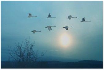 HD Poster Frühling oder Herbst Migration von Kränen