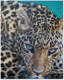 HD Poster Leopard