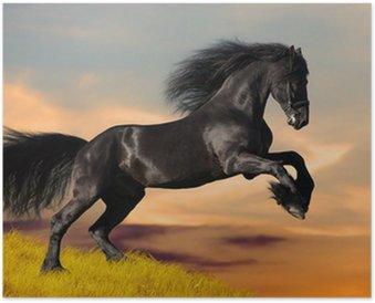 HD Poster Schwarz Friesen Pferd galoppiert im Sonnenuntergang