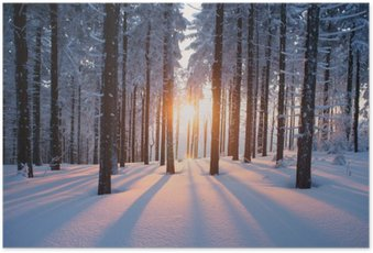 HD Poster Sonnenuntergang im Winterwald