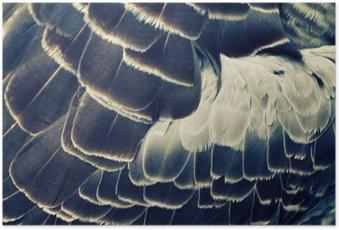 HD Poster Vogelgefieder Hintergrund