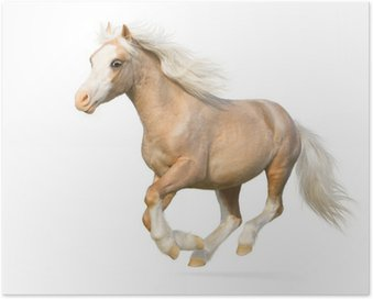 HD Poster Welsh Pony galoppiert