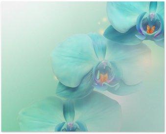 HD Poster Çiçek Orkide arka plan