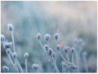 HD Poster Abstracte natuurlijke achtergrond van bevroren planten bedekt met rijp of rijp