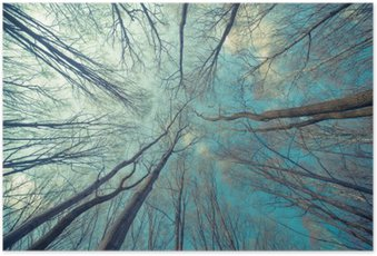 HD Poster Bomen Achtergrond van het Web