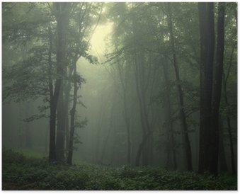 HD Poster Groene bos na regen