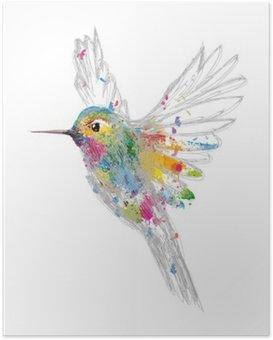 HD Poster Kolibrie