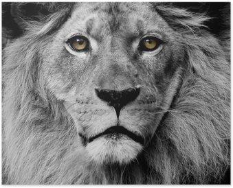 HD Poster Leeuw ogen