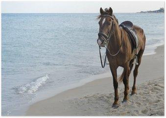HD Poster Paard op het strand