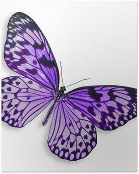 HD Poster Paarse vliegende vlinder