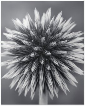 HD Poster Purple Globe Thistle B
