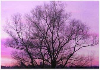 HD Poster Silhouet van een grote oude boom op een prachtige zonsondergang paarse achtergrond retro gefilterd