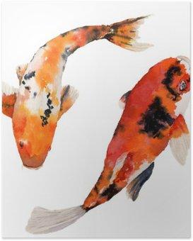 HD Poster Waterverf het oosterse regenboog karper te stellen. Koi vissen op een witte achtergrond. Onderwater illustratie voor het ontwerp, achtergrond of weefsel