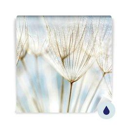 Fototapet till badrummet - Abstrakt maskros blomma bakgrund
