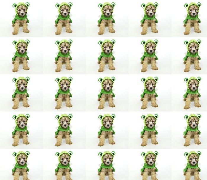 Vinylová Tapeta Pudl štěně v frog oblečení. - Savci