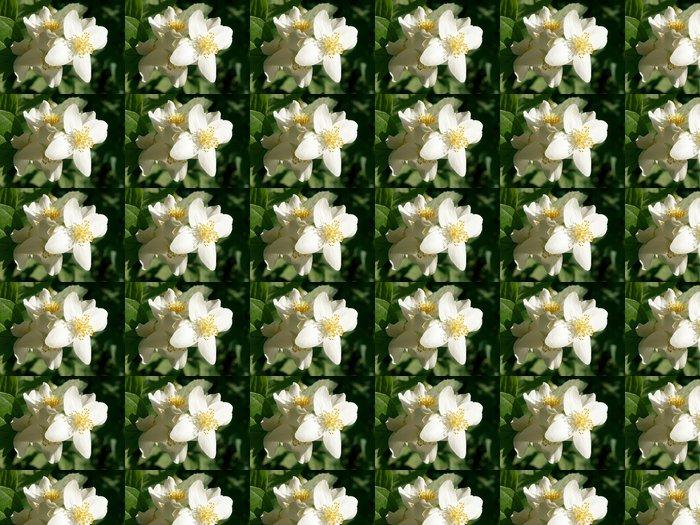 Vinylová Tapeta Květy jasmínu - Květiny