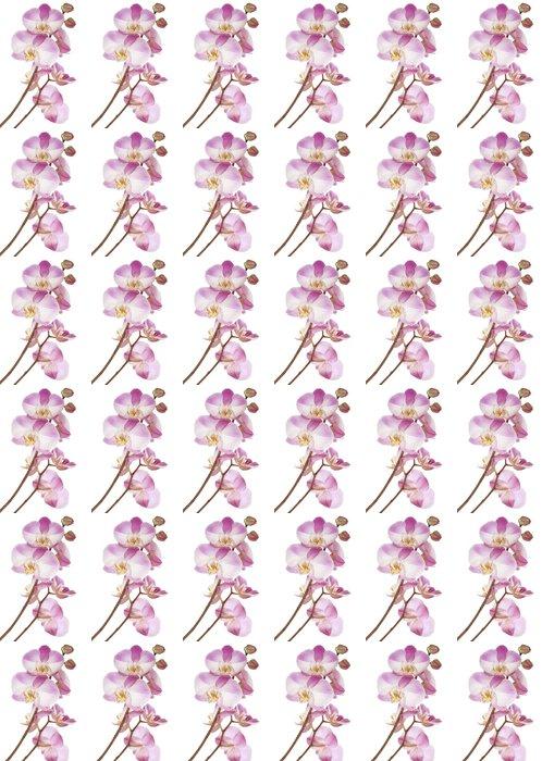 Vinylová Tapeta Růžové orchideje - Květiny