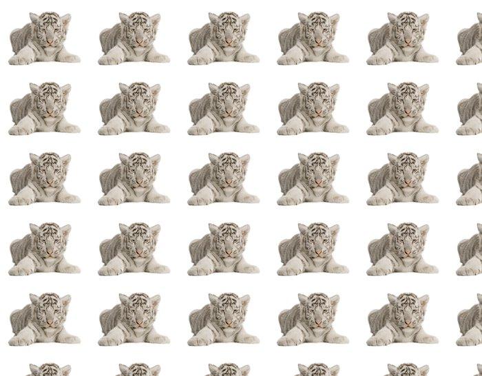 Vinylová Tapeta Bílý tygr mládě (2 měsíce) - Nálepka na stěny