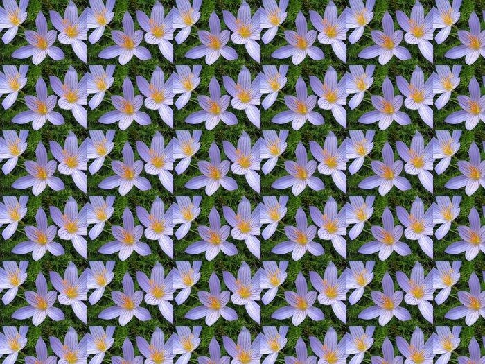 Vinylová Tapeta Colchicum - Květiny