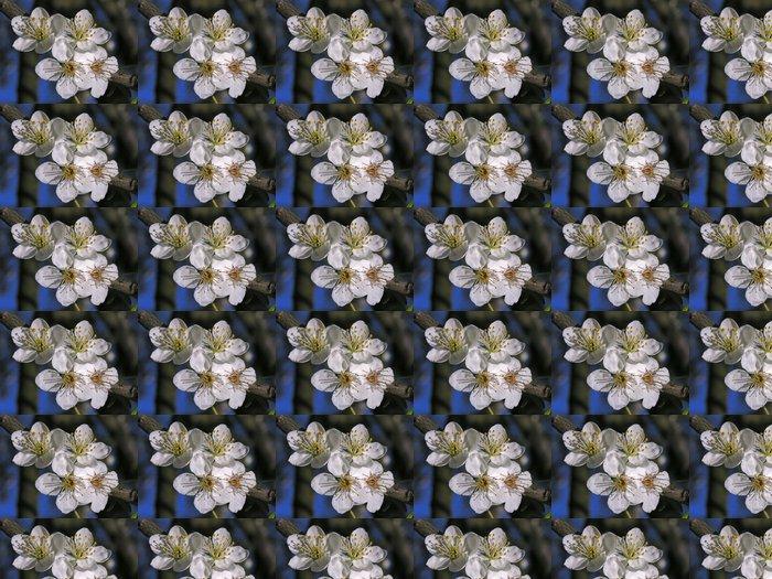Vinylová Tapeta Třešňové květy - Květiny