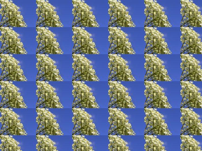 Vinylová Tapeta Bezový květ Sambucus nigra - Květiny