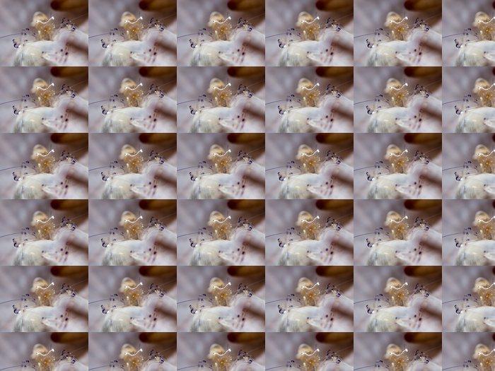 Vinylová Tapeta Klaun Anemone Shrimp - Periclimenes brevicarpalis - Vodní sporty