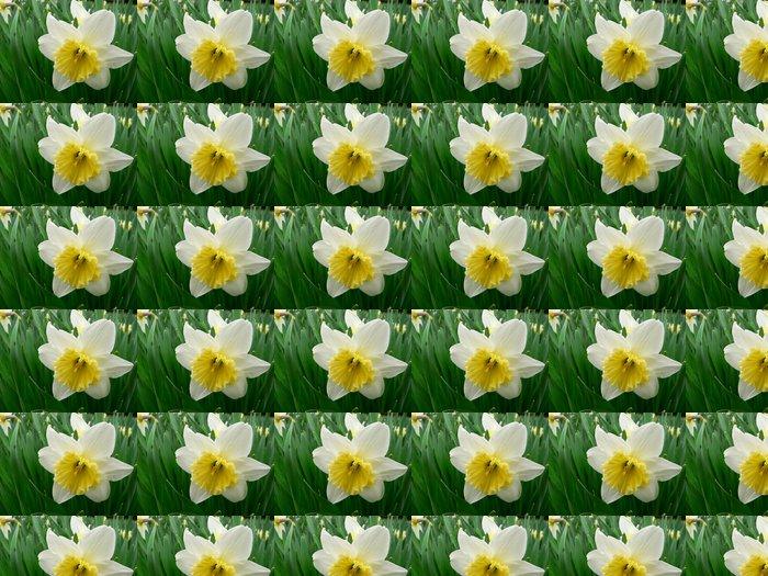 Vinylová Tapeta Narcisy kvetou - Květiny