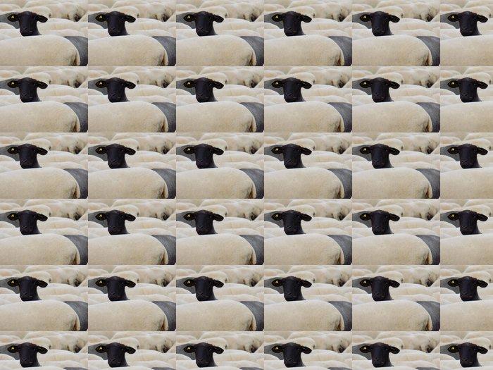 Vinylová Tapeta Černá ovce - Savci
