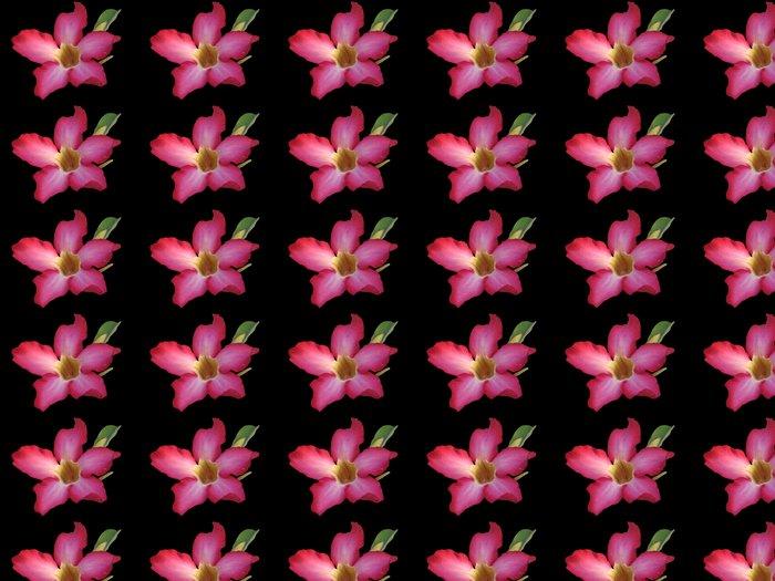 Vinylová Tapeta Kalachuchi na černém - Květiny