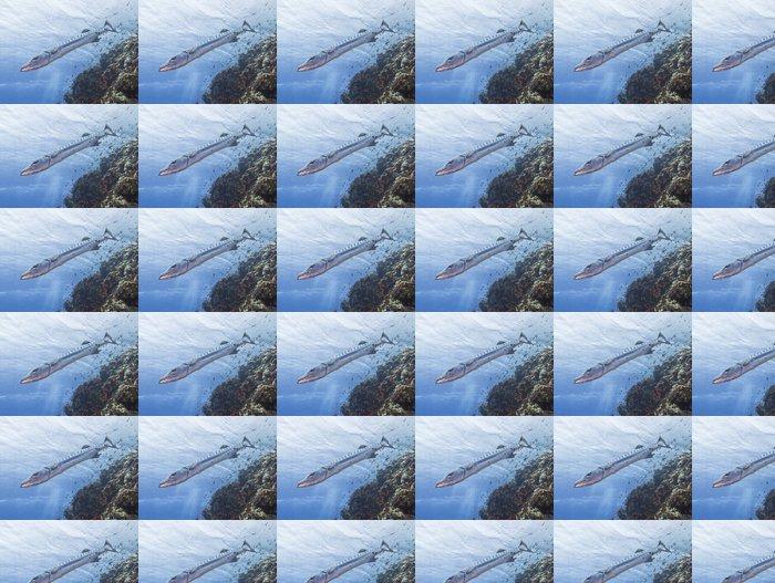 Vinylová Tapeta Velká barakuda na tropickém útesu - Vodní a mořský život